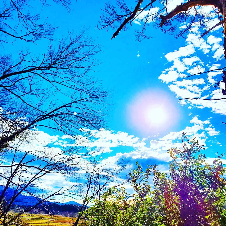 青空と色とりどりの木