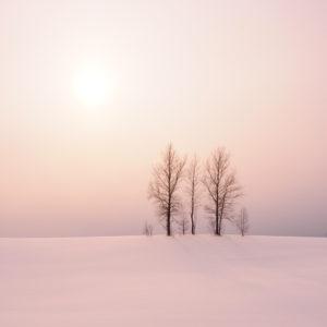 冬の二本木